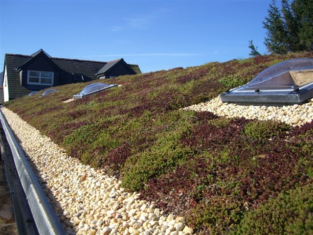 Green Roofing Newcastle